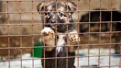 Antwerpse politie neemt 60 puppy's in beslag