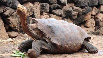 Diego, de reuzenschildpad die zo veel seks had dat hij zijn soort van de ondergang redde, mag na 44 jaar op pensioen