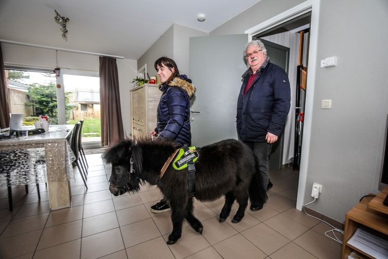 Dinky mag ook in de woonkamer wandelen.