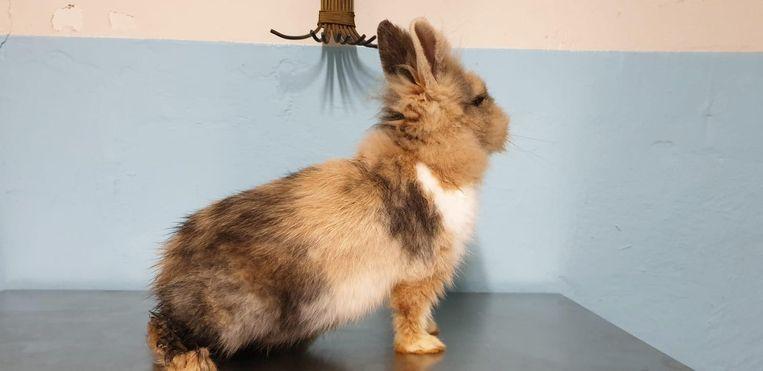 Het konijntje werd in een cadeaudoos langs de weg gedumpt.