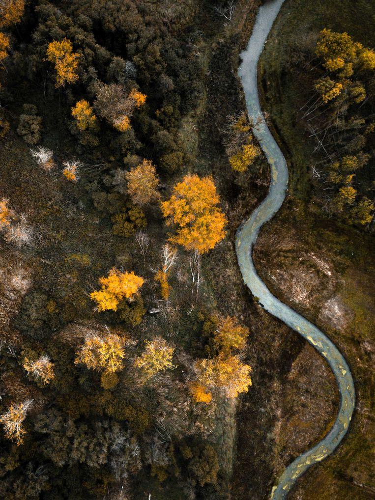 Verkleurde bossen tijdens de herfst, gezien vanuit de lucht.  Beeld ANP
