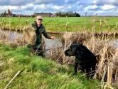 Jager zorgt er met veilige broedplaatsen voor dat er weer eendenkuikentjes komen in Haarle