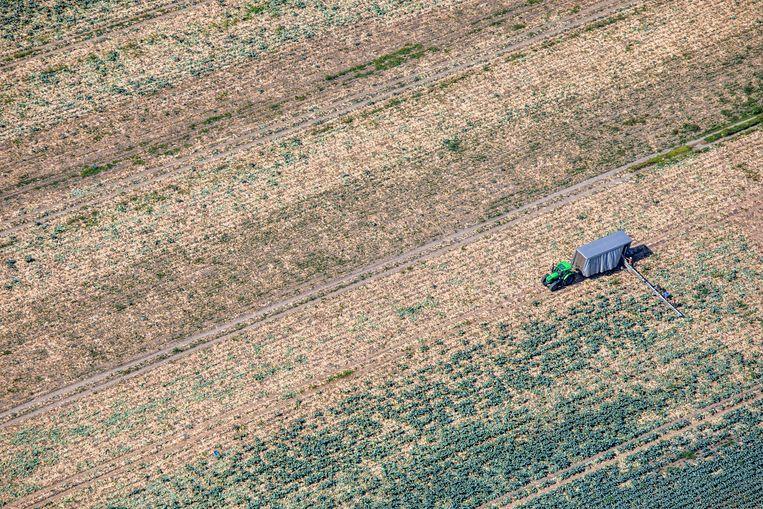 Een Noord-Hollandse boer op zijn droge akker.   Beeld Raymond Rutting / de Volkskrant
