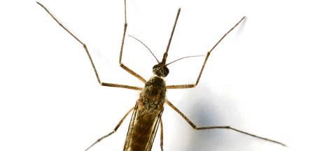 Muggenoverlast piekt vroeg door warme weer