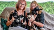 """Kapster redt zwangere straatkat van dood en voedt kittens op: """"Dump geen poezen langs de weg"""""""