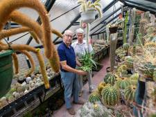 'Door grillige vormgeving is cactusheel aantrekkelijk'