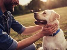 Loslopende hond valt wandelaars aan