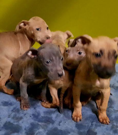 Moederhond en negen pups bevrijd uit smerig huis: 'Liepen door eigen uitwerpselen'