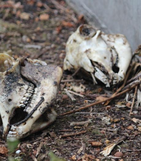 Kinderen vinden schapenschedels op speelveldje in Hengelo