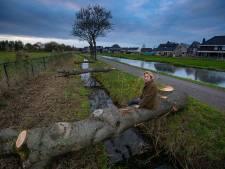Bomenkap langs Trekvaart maandag weer voor de rechter; Kampen wil door