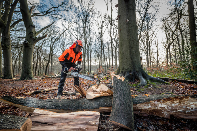 Boswachter Erik de Jonge maakt na de storm van 18 januari wandelpaden in het bos vrij van omgewaaide bomen en afgeknapte takken.