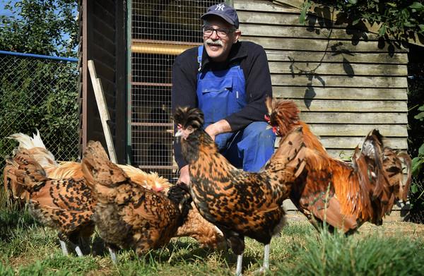 Regels voor industriekip **nekken kleine producent**:  'Straks hebben we nog maar één soort kip'