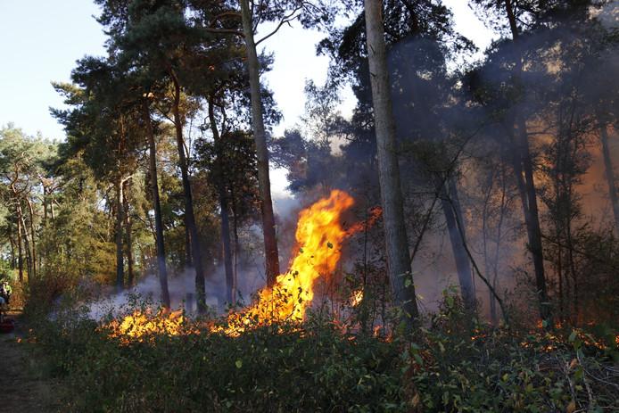 Hoge vlammen door de bosbrand.