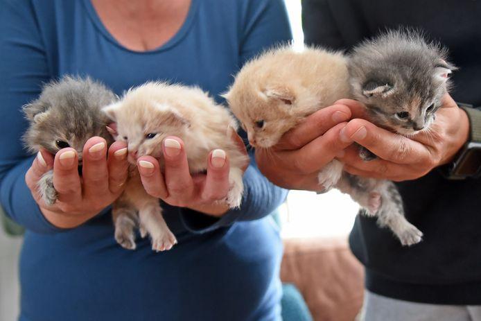 De vier geredde katjes.