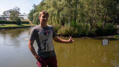 "Warandevissers proberen visbestand te redden: ""Massale sterfte door zuurstofgebrek in vijver"""