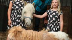 Verwaarloosde pony's na week al geadopteerd