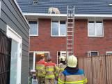 Kat op het dak? Nee, hond in de dakgoot
