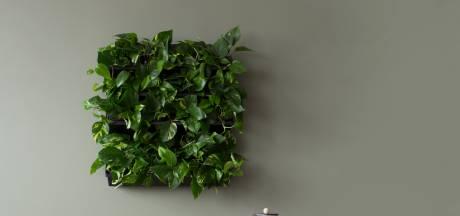 Last van stress? Koop een stukje boslucht voor aan de muur