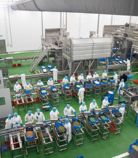 Kipspecialist Plukon in Wezep breidt maaltijdenfabriek uit naar Dronten
