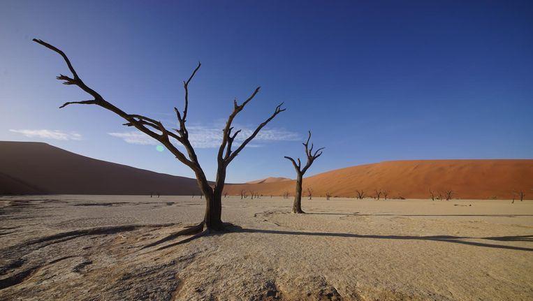 Droge bomen in de Sossusvlei; een kleivallei in het midden van de Namibwoestijn. Beeld Govert Schilling