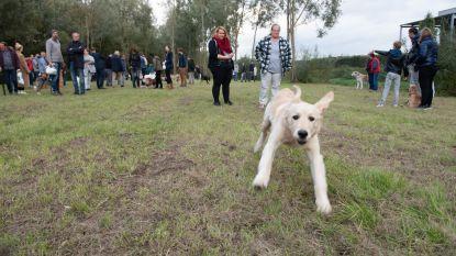 N-VA pleit voor hondenweide in centrum