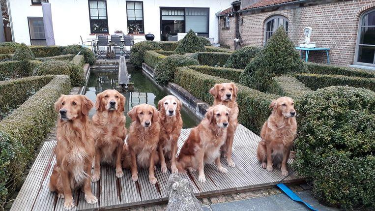 Dana (midden) poseert met haar zes nakomelingen Joep, Fellow,  Ginny, Toska, April en Prince op het terras van B&B Dotter 17. Broertje Aurelio was verhinderd en bleef achter in Frankrijk.