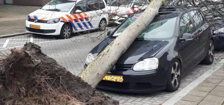 Meldingen over stormschade blijven binnenstromen, veel omgewaaide bomen door zware windstoten