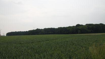 Grote uitbreiding voor Buggenhout Bos