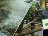 Dominic Thiem adopteert koalababy in dierentuin Wenen