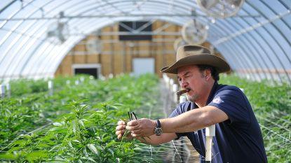 'According to Jim'-acteur kweekt nu fulltime cannabis