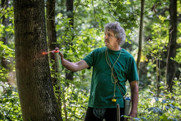 Boswachter Harco Bergman is voor het vijfde jaar zo'n tienduizend zieke bomen aan het blessen, dat wil zeggen met een spuitbus een kleurtje gegeven ten teken dat de zaag in die bomen kan. Het zijn de bomen die het ernstigst zijn aangetast door de essentaksterfte.