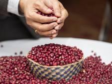 Droogte: bonen uit Afrika kunnen straks hier groeien