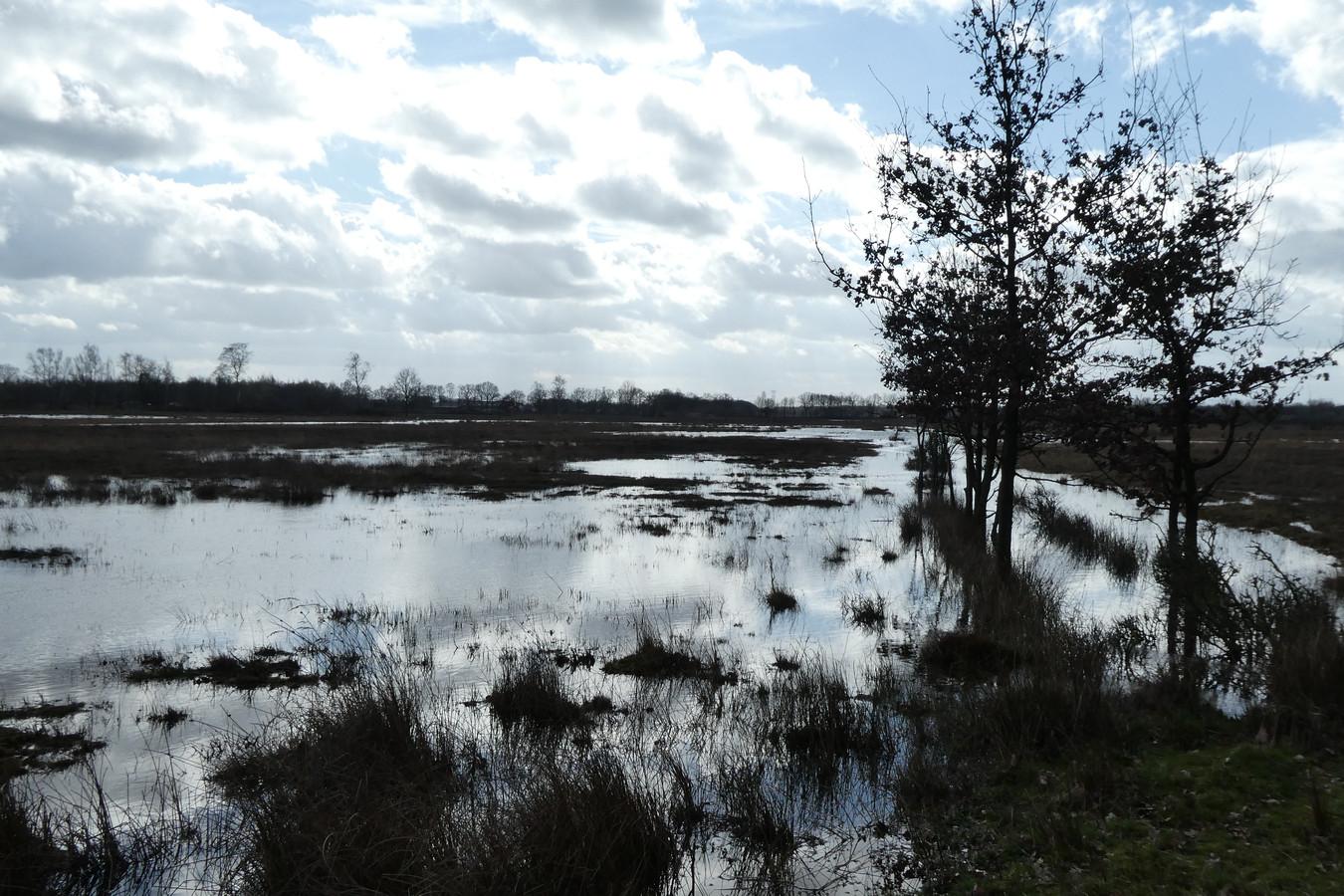 Bij Banisveld in het Natura-2000 gebied bij de Kampina zijn allerlei maatregelen al uitgevoerd om er een natte natuurparel van te maken.