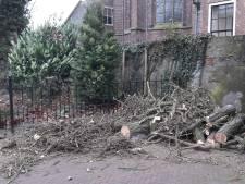 Wat kan de Gingko in Harderwijk nog aan?