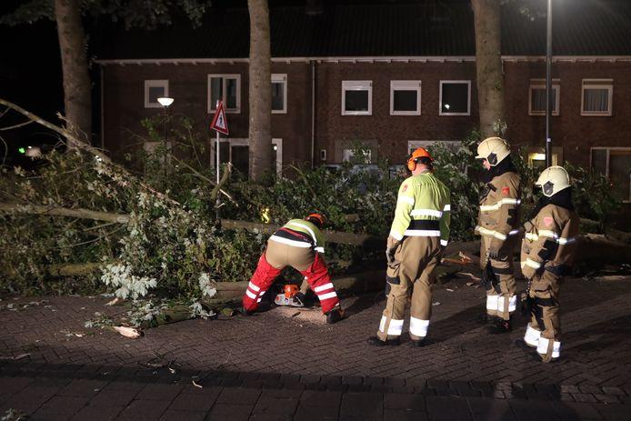 Omgewaaide boom aan de Kloosterstraat in Schijndel