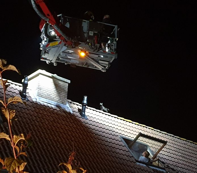 Katje op dak in Waalwijk