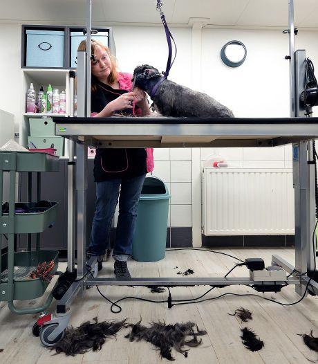 Trimsalons mogen toch knippen: 'Klitten bij dieren doen echt heel veel pijn'