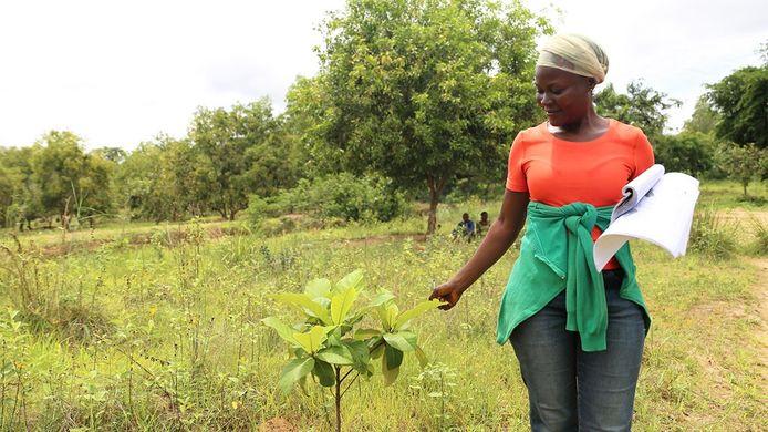 Un peu plus de 4.000 arbres vont êtres plantés dans la réserve de Luki grâce à l'Université de Liège et à ses nouveaux étudiants.