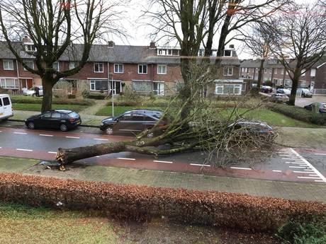 Procedure extreem weer van kracht: omgewaaide bomen en losse dakplaten