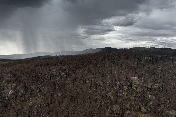 Regen boven afgebrande stukken bos in Tamworth, Australië.