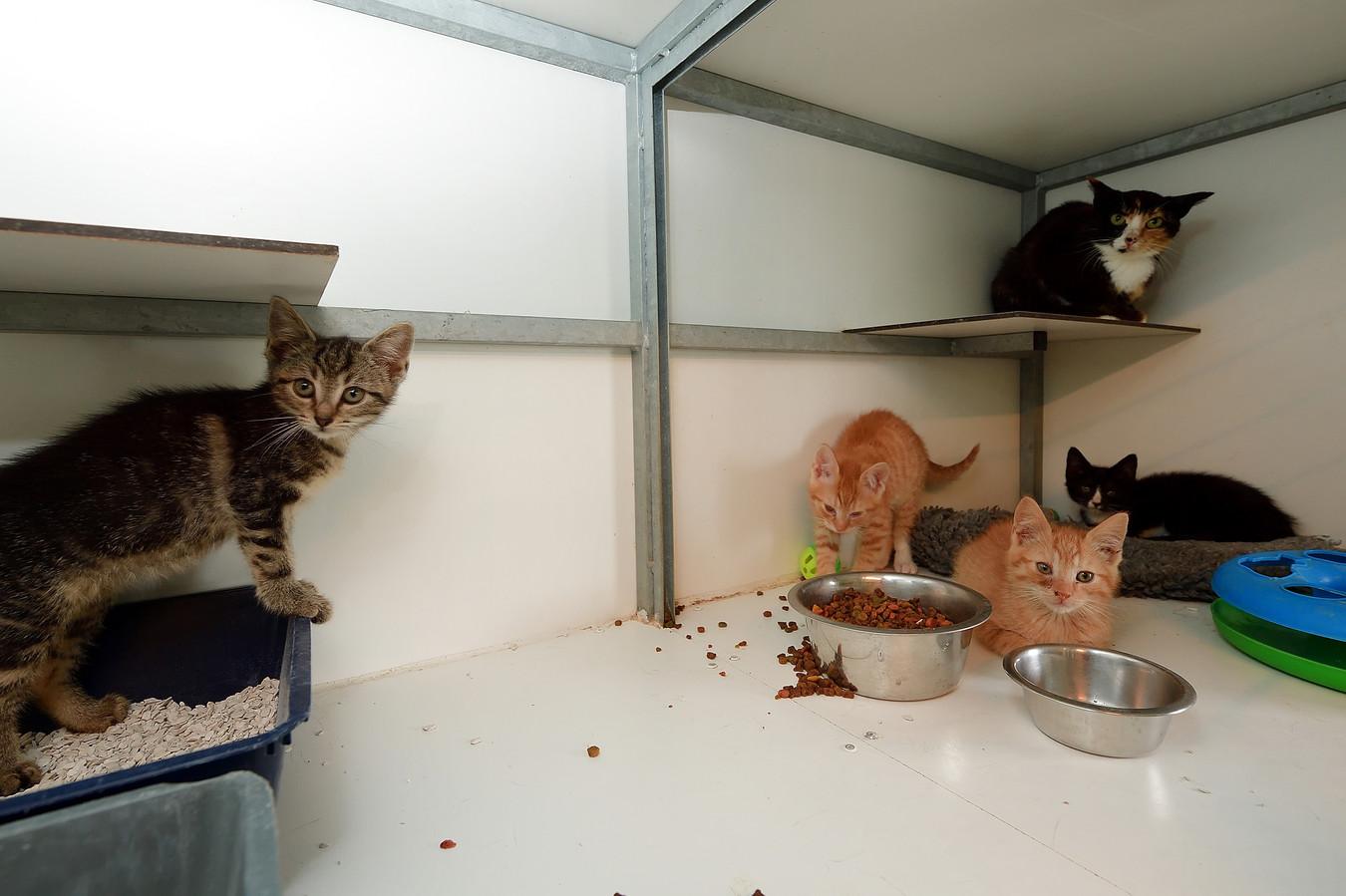 Kittens in een dierenopvang