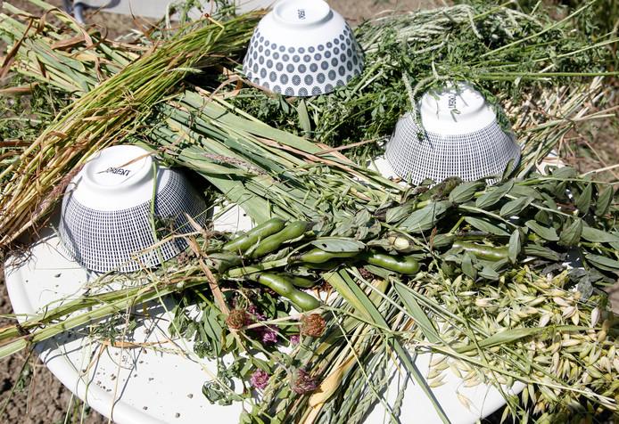 Gewassen die worden wordt verbouwd om de bruine kiekendief een leefgebied te geven, zoals spelt en veldbonen.