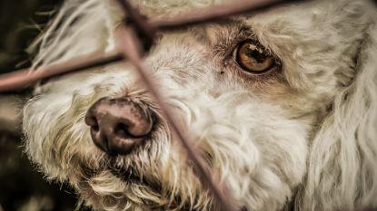 Inspectie Dierenwelzijn neemt recordaantal dieren in beslag