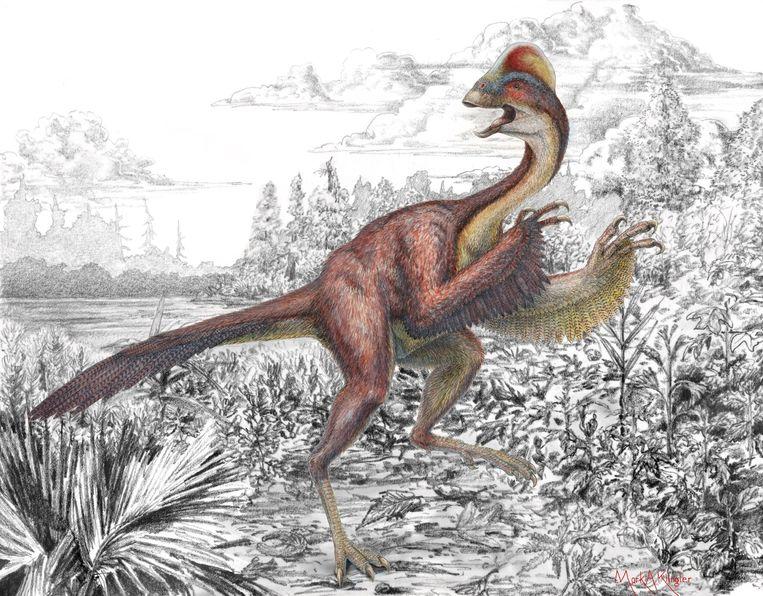Reconstructie van de recent ontdekte dinosaurus 'Anzu wyliei', bijgenaamd 'de kip from hell'. Beeld Reuters