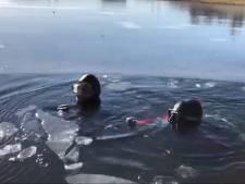 IJsduikers redden te water geraakte hond