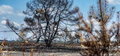 'Plant- en diersoorten op uitsterven door aanhoudende droogte'