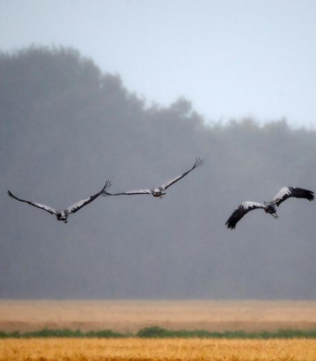 Natuurwerkers in Buurse wijken voor kraanvogels in Witte Veen