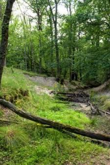Het nieuwste idee om het water vast te houden op de Veluwe? Zandzakken