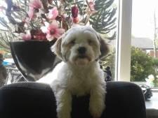 Hond Sammy doodgereden: 'Wij vragen ons af wat de bestuurder heeft bezield'