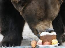 Roemenië opent berenjacht: dierenvrienden furieus